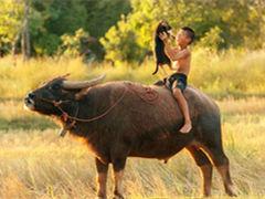 童年,与牛共舞!