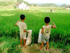钓青蛙,童年的乡村生活